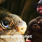 Miniserie Galápagos en Animal Planet