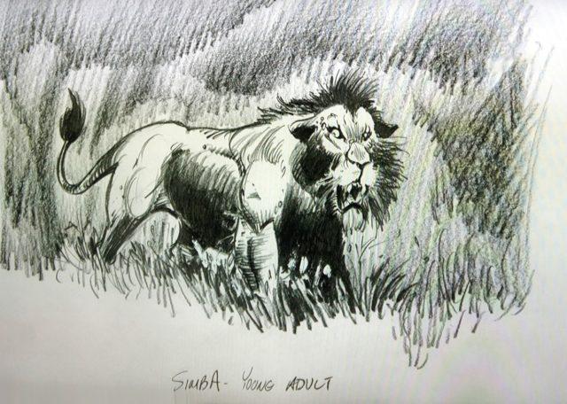 sketch simba young adult min