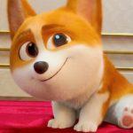 Corgi: Un perro real