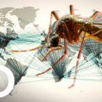 Documental Mosquito de Discovery