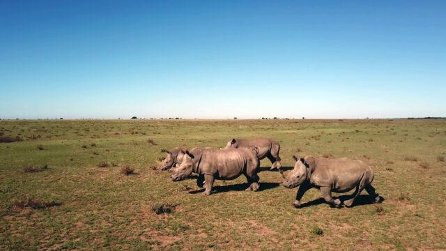 national geographic dia del rinoceronte 1