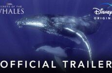 secretos de las ballenas disney plus